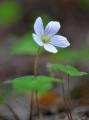1.SLUNCI BLÍŽ: jakou sílu musí v sobě mít první jarní květy, aby se prodraly na světlo ztvrdlou zemí a tlejícími listy?