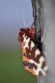 6.PASTELKOVÁ: je škoda být celý život šedivý. Stejně jako motýli, ví to i mnoho lidí.