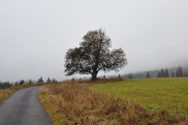 Srdcový strom.