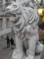 Lev v pozoru
