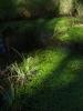 Flóra tůní je důvodem k ochraně. Jeden druh bublinatky zde má jediný výskyt v celé ČR.
