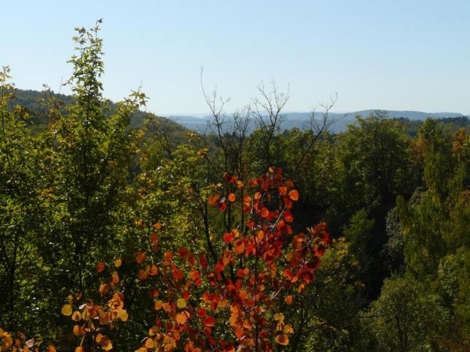 Některé stromy už barví podzim