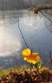 Podzim zkrášluje břehy rybníků.