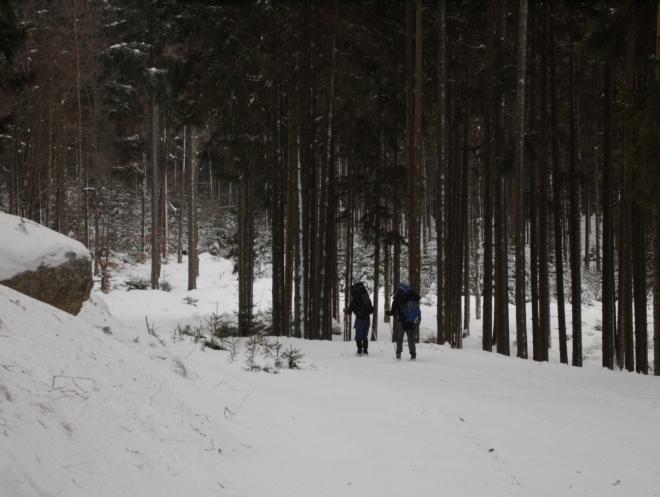 Na cestě novohradskými lesy (Radim)