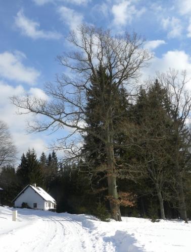 Pořádně vzrostlý strom.