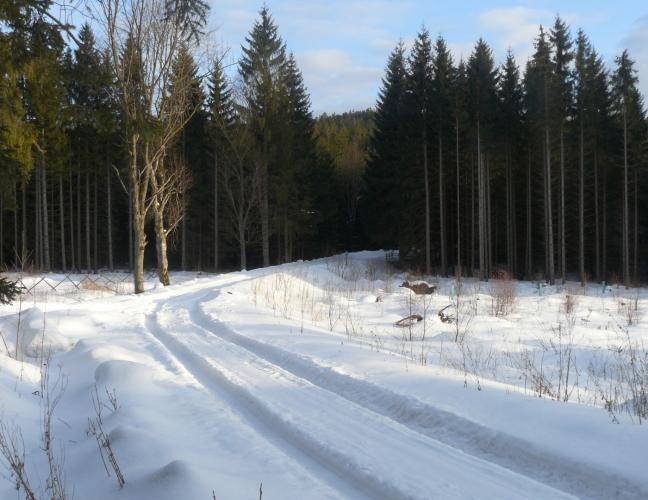 Po této cestě jsme přijeli z lesa.