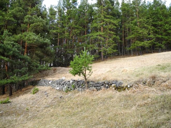 Lesní mýtiny jsou parcelovány navršenými kameny, kterých je v okolí všude plno.