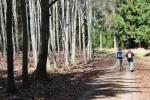 V bukovém lese raší první pupeny, les kolem ještě prosvětlují paprsky slunce.