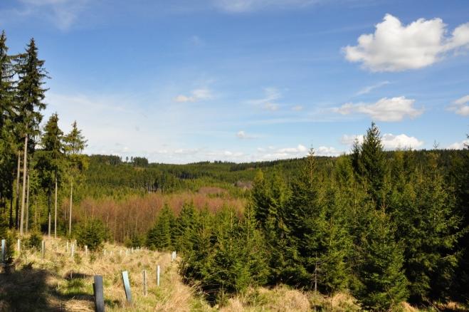 Lesy pokračují na Skály a Kváskovice, my se stáčíme postupně vlevo a dosahujeme opět modrou značku. Ta sem vede od Čepřovic a po ní již se budeme postupně vracet hřebínkem k Helfenburku.
