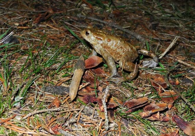 Večer nás navštíví několik žab a v noci několik selátek a divočáků. Místo spánku tak trávím přikládáním do ohně a pozorováním stínů na vodní hledině pod námi.