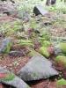 Kamenné moře pod Mařským vrchem.