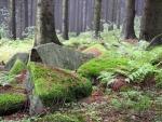 Kameny pod Mařským vrchem.