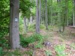 Na hřebenu již převažuje bukový les.