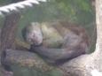 Spící opička (2007, Šárka Čížková)