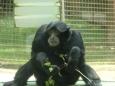 Chudák gorilka (Tomáš Novotný)