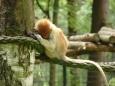 Opička se stydí (Tomáš Novotný)