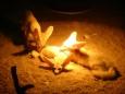 Nádherná zvířata - fenci (Tomáš Novotný)