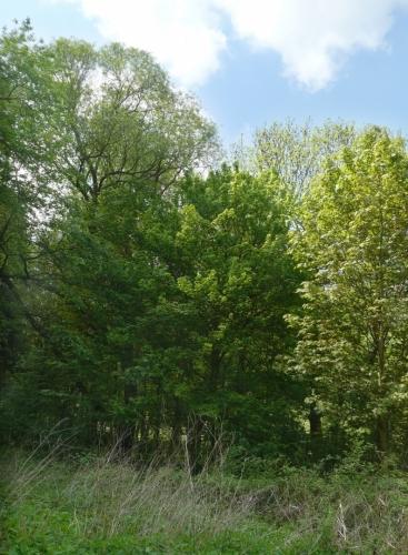 Stromy na ostrově aneb pokus o HDR fotku.