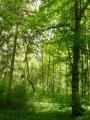 Divoký les na Ostrově