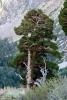 Cestou z Yosemite do kempu