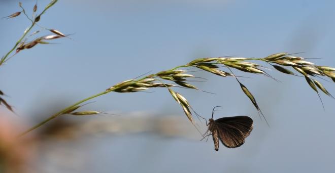 Motýlků jsou kolem stovky...