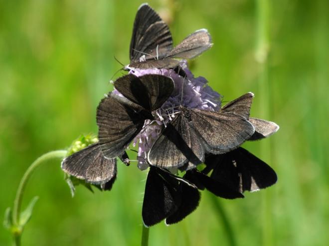 Boj o nektar...