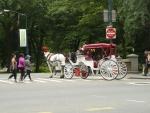 Koňské taxi po Central parku