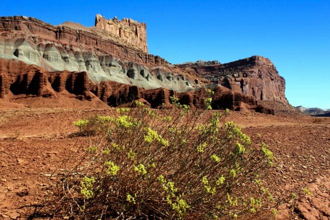 Utah - národní park Capitol Reef