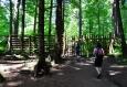 Oplocení má zabránit vstupu vysoké zvěře okusující mladé stromky. Že by se divočina měla přece jen chránit?