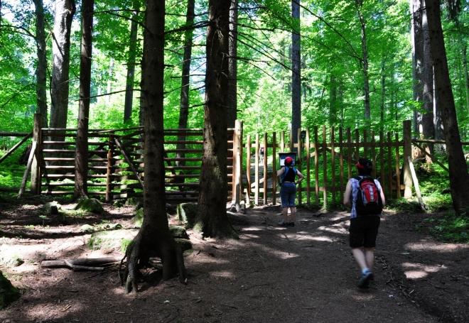Oplocení má zabránit vstupu vysoké zvěře okusující mladé stromky.