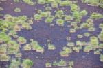 Trsy suchopýru dělají na černém podkladu rašeliny hezké obrazce.