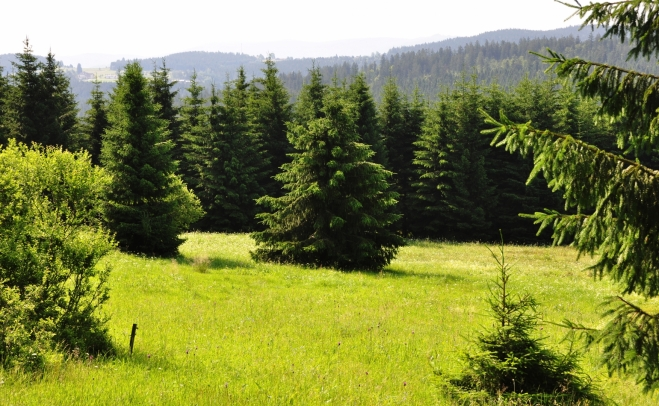 Pohled k údolí Hraničního potoka.