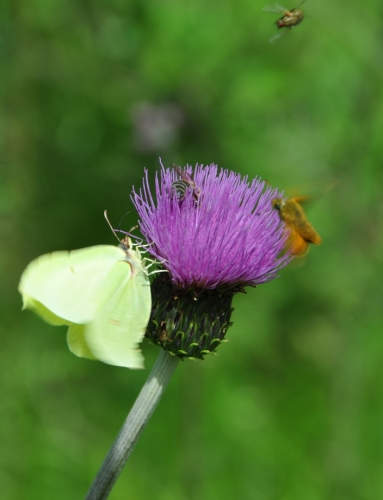 Boj o nektar.