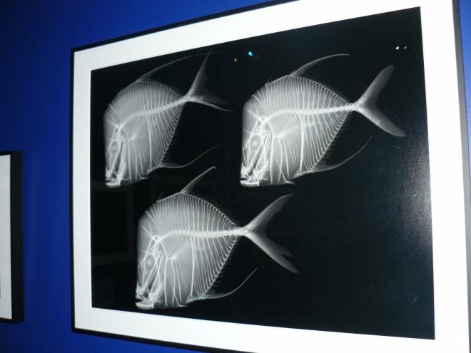Ryby pod rentgenem