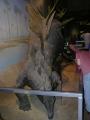 Steganosaurus
