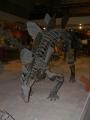 Kostra steganosaura