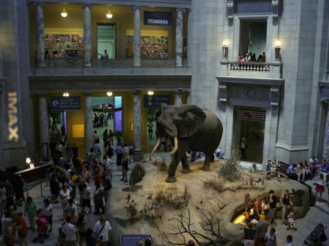 Slon trůní celé budově