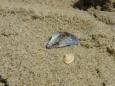 Makro písku a mušlí.