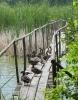 Na rybníku Láska...