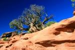 Utah, National Park Canyonlands, Grand view Point Overlook - živé a neživé