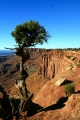 Utah, National Park Canyonlands, Grand view Point Overlook - bonsai