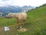 Kůň v průsmyku Passo d'Eira