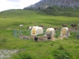 Příbytky pro (vybrané) krávy u chaty Alpe Trela