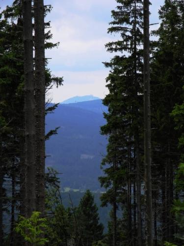 V modravé dáli ční nade všemi vrcholy Šumavy Velký Javor (1 456m).