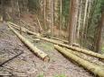 Sestup ke Křemelné vede i kůrovcem napadeným lesem. Čas prokáže, jestli se dá zabránit úplnému uschnutí smrčin. Vzhledem k nepřístupnému terénu to nemusí být snadné.