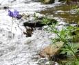 Potrhaná květena, která byla vystavena velké vodě. U Stodůleckého mostu byl před nedávnem vyhlášen po bouřích a vytrvalých deštích stav ohrožení.