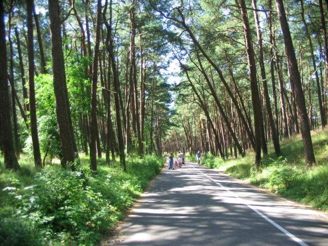 Kurská kosa je pestrou mozaikou různých biotopů. Velká část je pokryta lesem, který se střídá s travnatými či křovinatými porosty, bažinami a písčitými plochami.