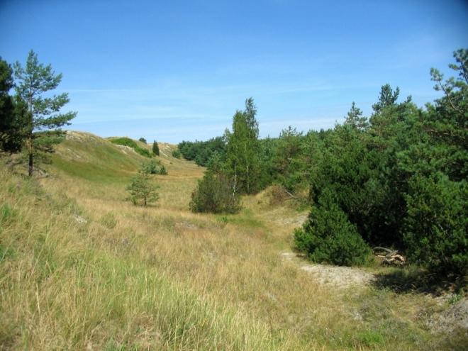 Pobřežní duna dosahuje až desetimetrové výšky.
