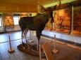 Informační středisko ve Stožci nesmíte minout. A nejen proto, že zde mají losa, kterého zabilo v roce 2005 auto u Přední Výtoně.