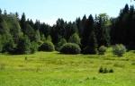 Z turistické značky míříme do údolí Rudíkovského potoka.